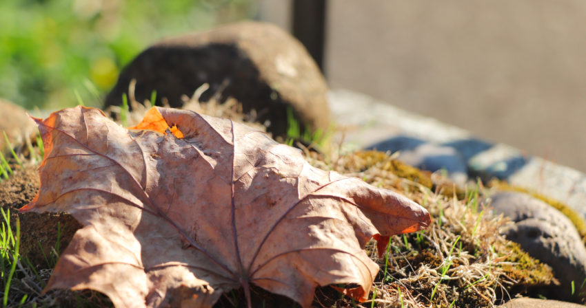 Student photo Fall Leaf and rocks
