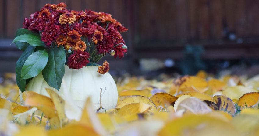 Fall pumpkins and flowers amongst fall leaves picture